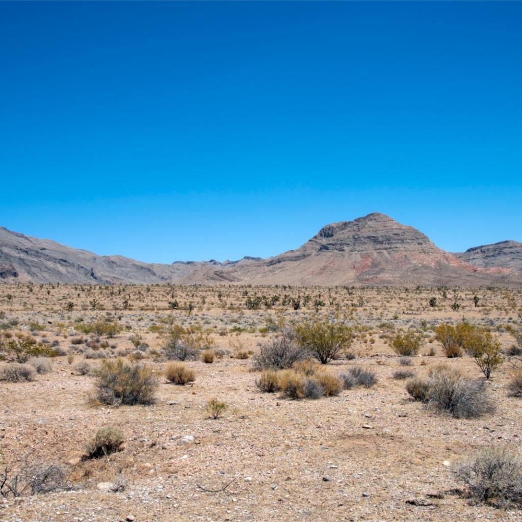В пустыне Невада построят Crypto City